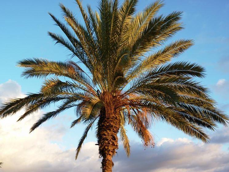 Oggi assemblea pubblica al municipio il nerviese - Mobili di palma ...